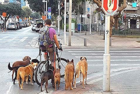 7-Dog Walker Biking on Rothschild Blvd.