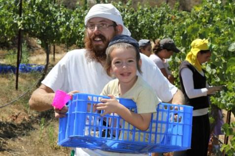 Israeli Agriculture in Bat Ayin in Gush Etzion