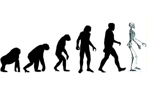 Evolution: fact or theory?