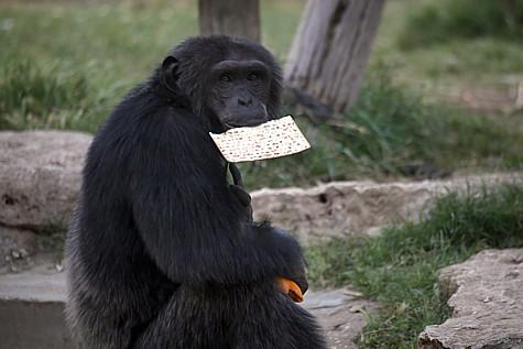Zoo Matza