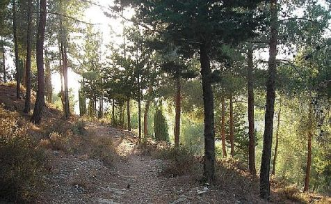 View of a trail in the area of Nahal Revida in the Jerusalem Forest, west of the capital.