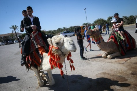 Riding camels at the Almog junction.