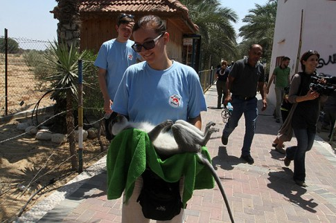 A member of Four Paws carries a monkey out of the Khan Yunis zoo in the southern Gaza Strip.