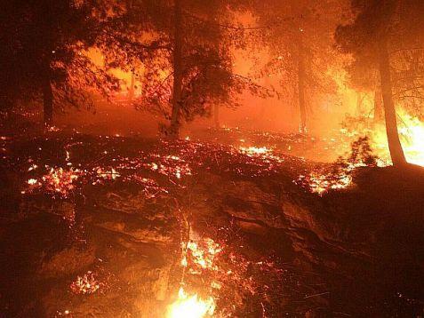 Forest fire at Geva'ot in Gush Etzion.