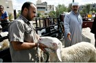 A Gazan man buys goats and sheep at a local cattle market in the southern Gaza Strip. October 01, 2014.