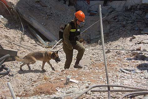 Rescue worker with dog at the site of the building collapse September 5, 2016 in Ramat Hakhayal, Tel Aviv.