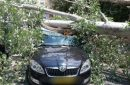 Tree collapsed on driver's car in Jerusalem