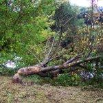 """""""Aktion Weiden für den Biber"""": Diesmal gab es an der Roda Pflanzungen zur Lebensraumverbesserung des Nagers"""
