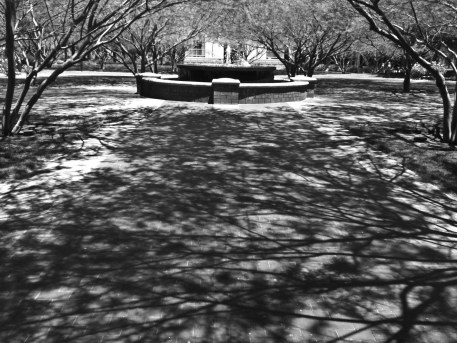 Canopy of Shadow