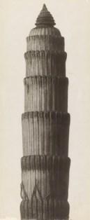 Karl Blossfeldt, Equisetum hyemale. Winterschachtelhalm, 1900 - 1926, Stiftung Ann und Jürgen Wilde, Pinakothek der Moderne, München