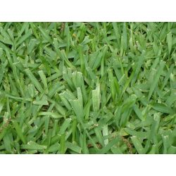 Small Crop Of Bahia Grass Seed