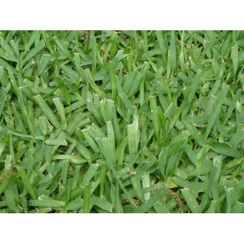 Medium Crop Of Bahia Grass Seed
