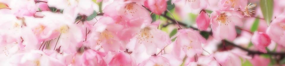 sakurabanner