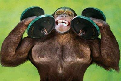 Workout Monkey Buddy