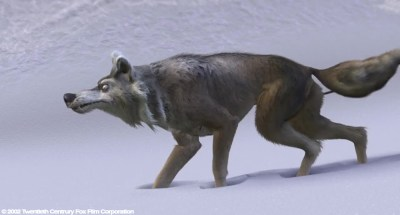 Wolf: Head Model