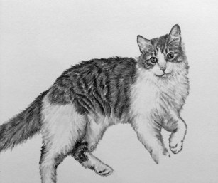 Norman Drawing
