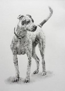 Sheaux Rae Drawing