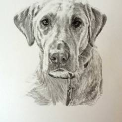 Havoc-Pet-Dog-Portrait-Drawing-by-John-Gordon