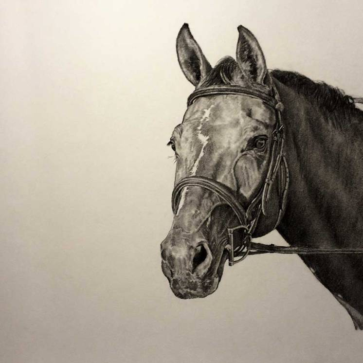 Zhivago-Pet-Horse-Portrait-Drawing-by-John-Gordon
