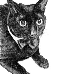 Pet Cat Portrait Drawing by John Gordon