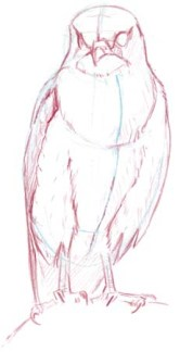 falcon chest 1