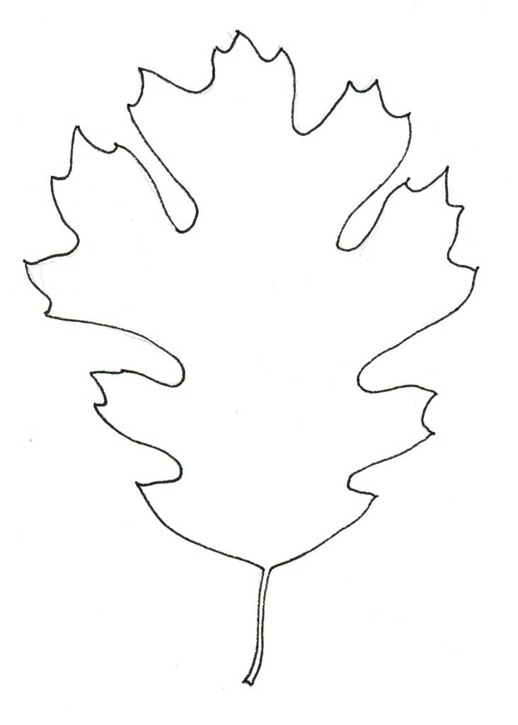 Contour Line Drawing Leaf : Black oak leaf stippleboard john muir laws