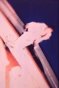 The Bluecoat. 1988