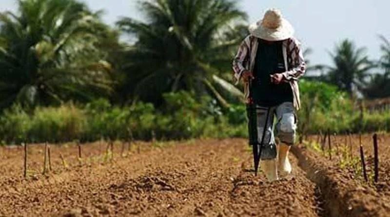 Produtores rurais atingidos por estiagem podem renegociar dívidas