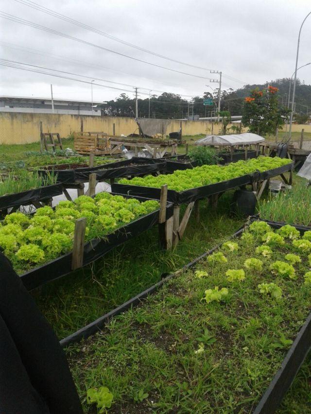 Escola reúne pais para a primeira colheita do ano da horta da unidade