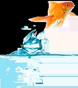 img-goldfish