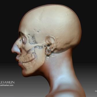 Meresamun skull