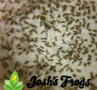 josh's frogs pinhead crickets for sale cricket breeding baby crickets