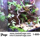 waterfall kit joshs frogs for sale vivarium paludarium completed vivarium