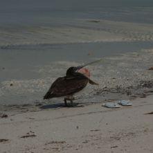 Isla Holbox Mexiko - Erfahrungsbericht 10