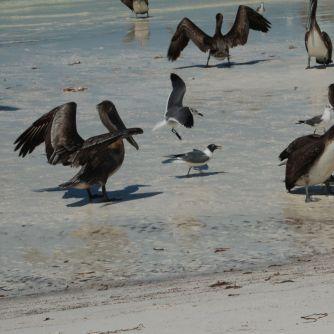 Isla Holbox Mexiko - Erfahrungsbericht 7