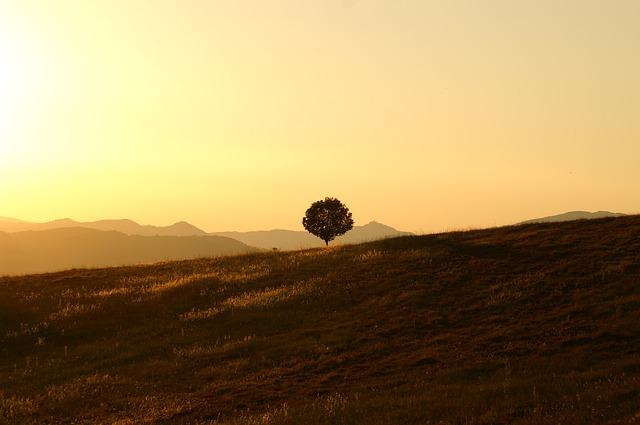 tree-189852_640