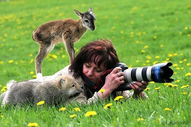 Site de rencontre entre animaux
