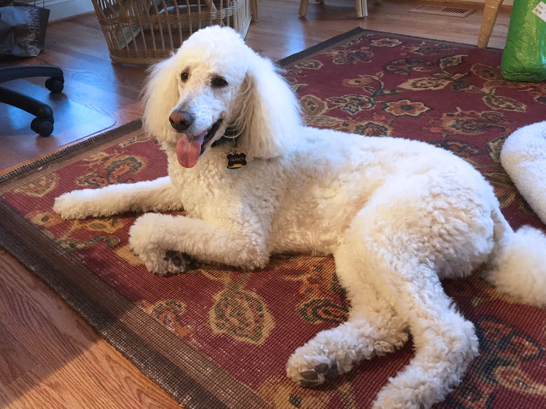 Distinguished A Jssa Rapy Dog Canine Chronicles A Girlfriend A Jssa Rapy Dog Jssa Quincy Dog 2018 Quincy Dog Looks Canine Chronicles bark post Quincy The Dog