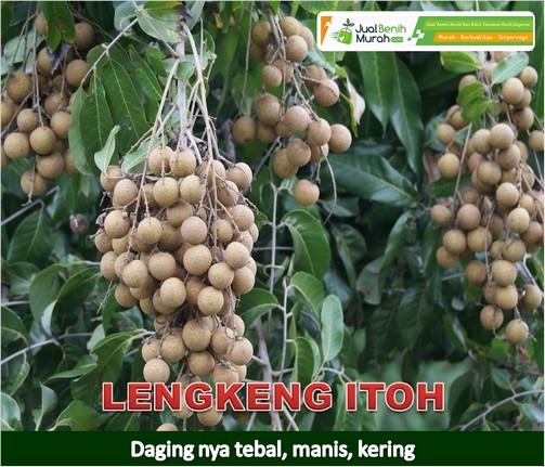 Lengkeng Itoh