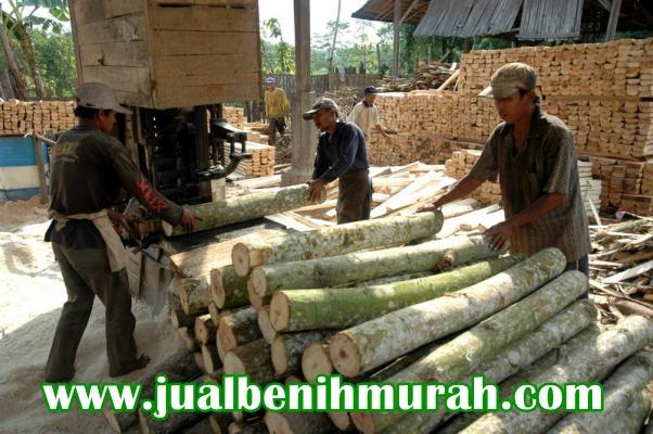 pemotongan kayu sengon