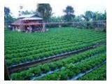 Kebun plus saung berfasilitas di Cisarua