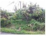 Jual Tanah dan Kebun Cokelat - SHM - 1817 m2 - Sumatera Barat