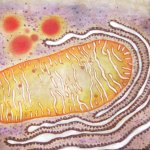 mitochondria painting