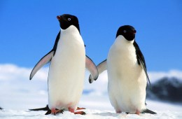 penguin couple Jule Magazine