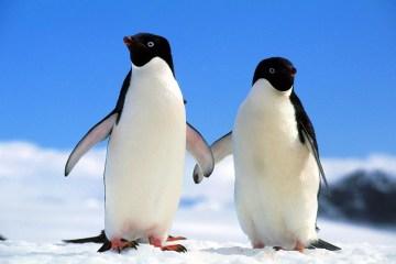 penguin couple Jule Magazine
