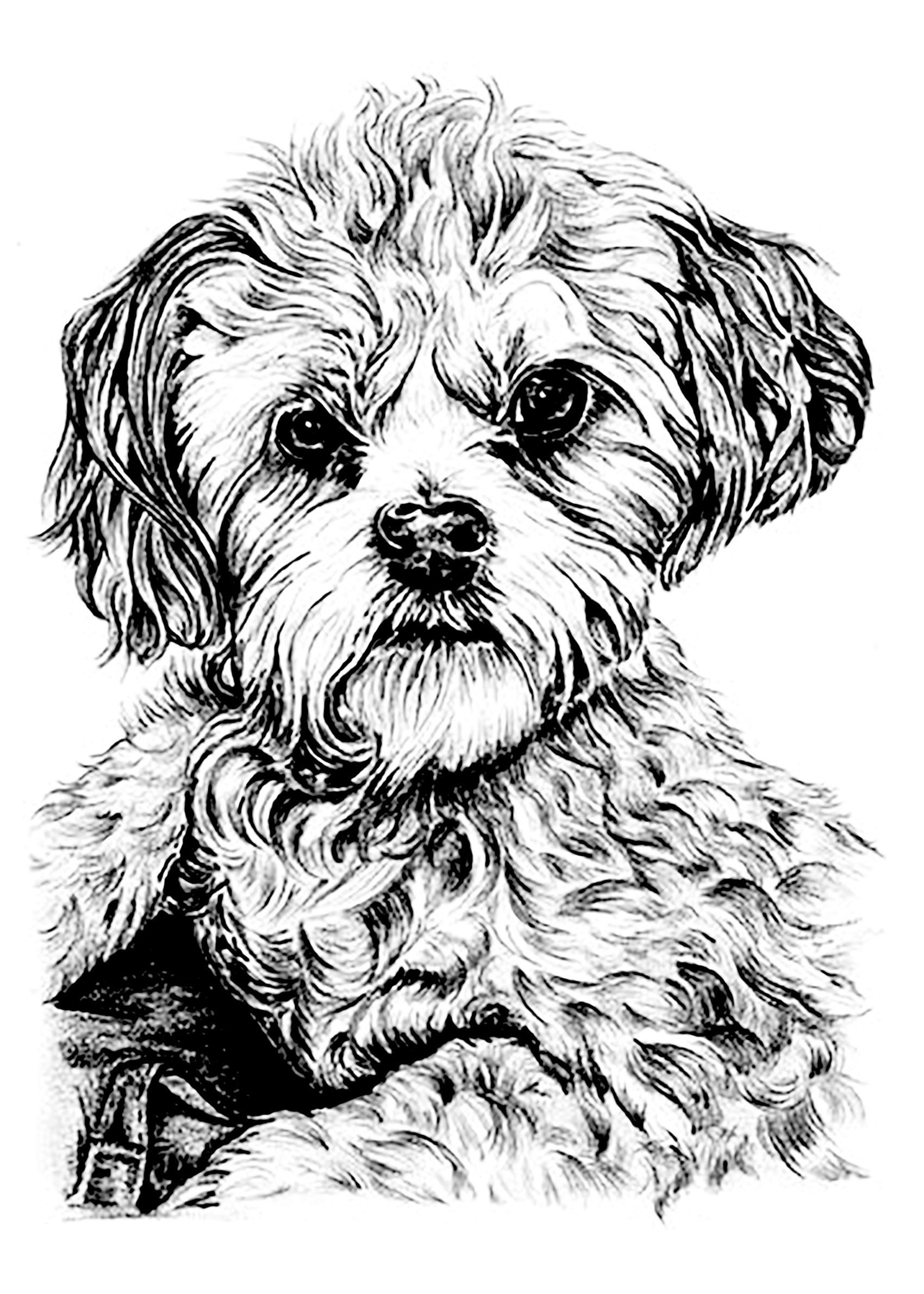 Fullsize Of Dog Coloring Pages For Adults