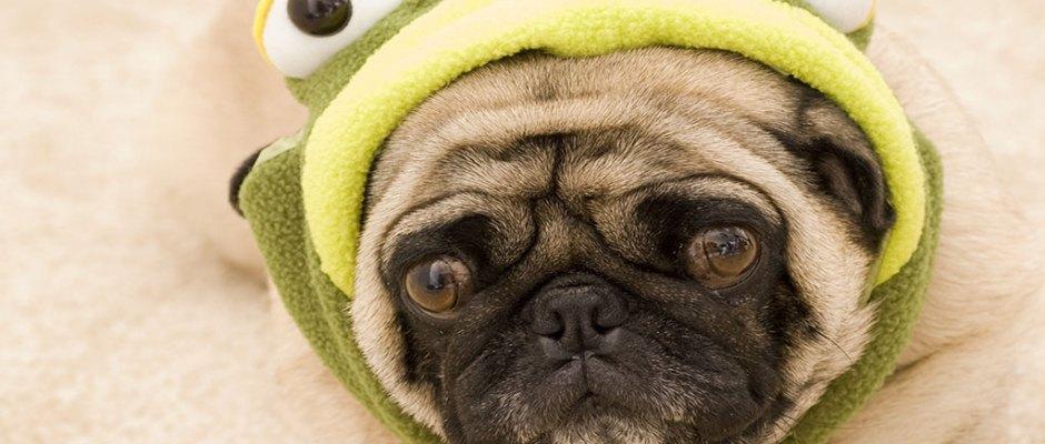 20161017_dogcostumes-frog_17236079