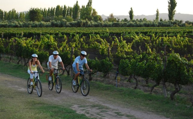 riding bikes in mendoza wine country