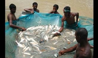 KENYA FISH FARMERS GET INFORMATION THROUGH MOBILE JUUCHINI
