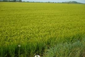 Campagne agricole 2016 : vers la mise en œuvre…